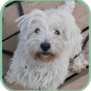 sobre Vera felicidad canina