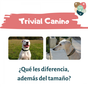Trivial Canino